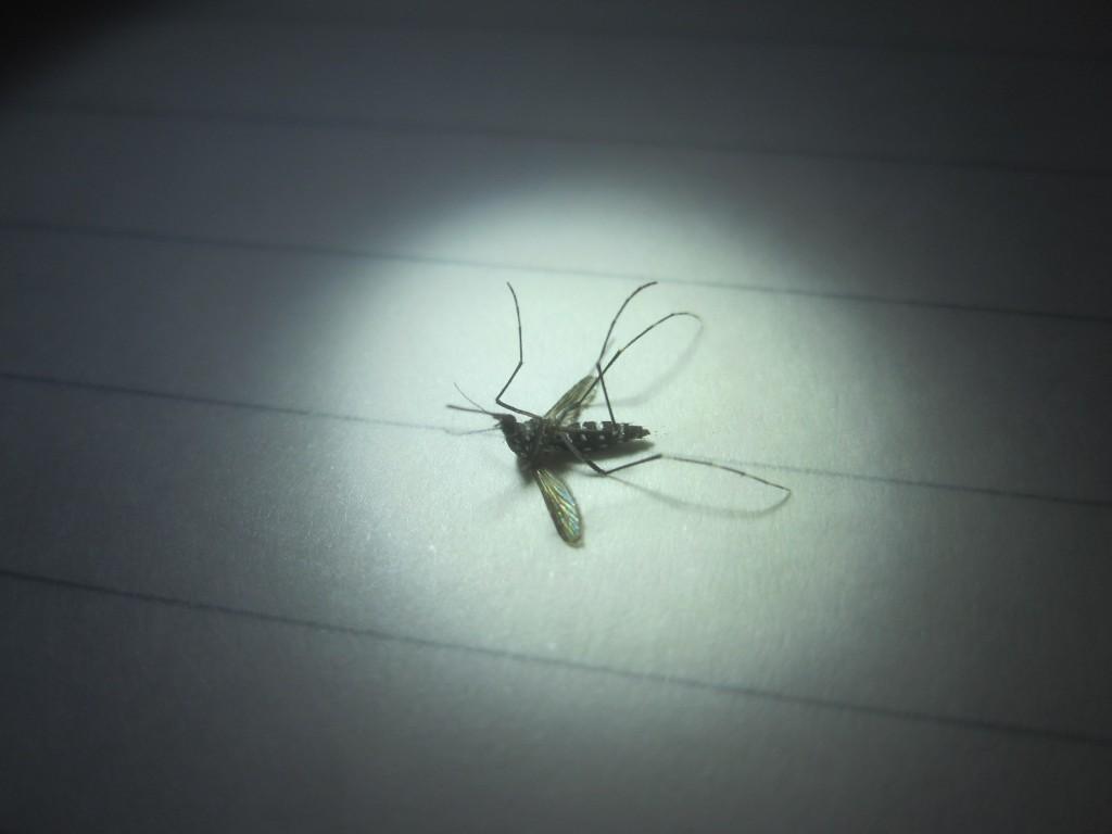 黒い蚊の黒い影が白い紙に落ちる意味深な写真
