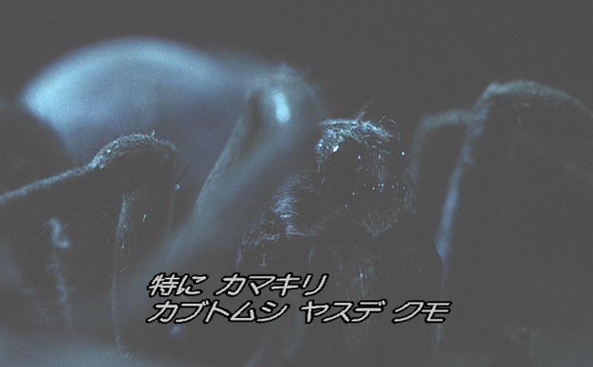 蟻(アリ)の天敵カマキリ、カブトムシ、ヤスデ、クモ(蜘蛛)