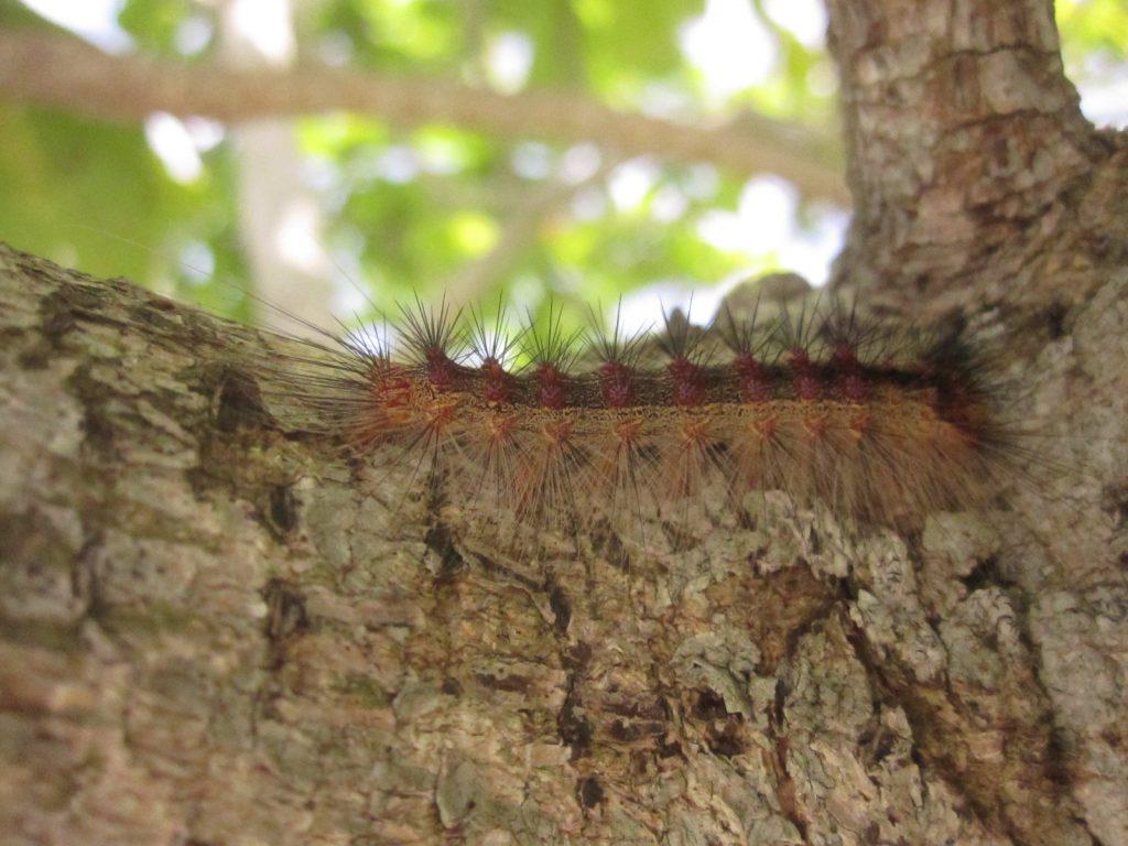 樹上を這い歩く毒々しい毛虫