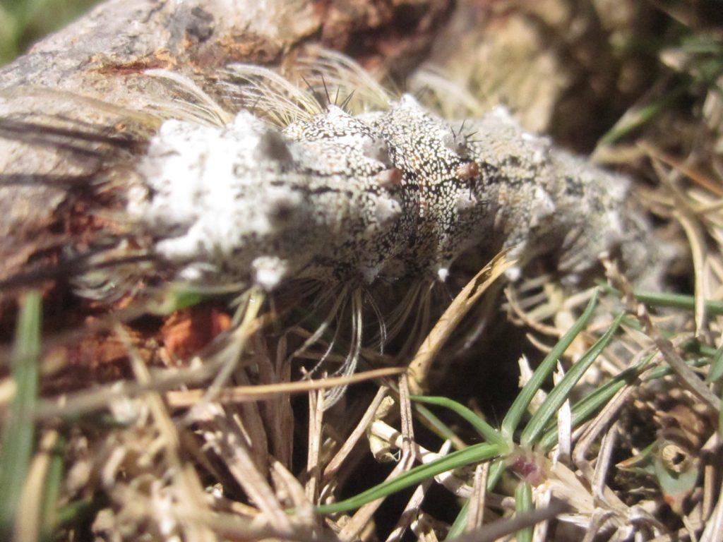 樹木の根っこ付近・地面近くに集まる毛虫