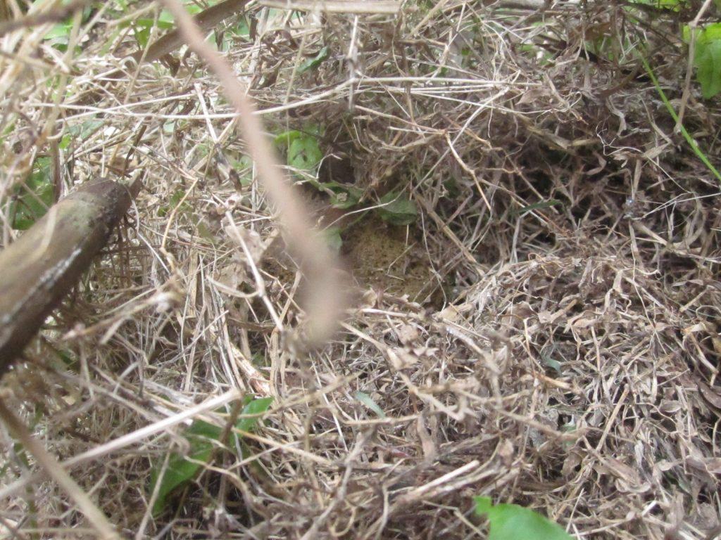 棒で枯れ草をかき分けて臭いの犯人を探す
