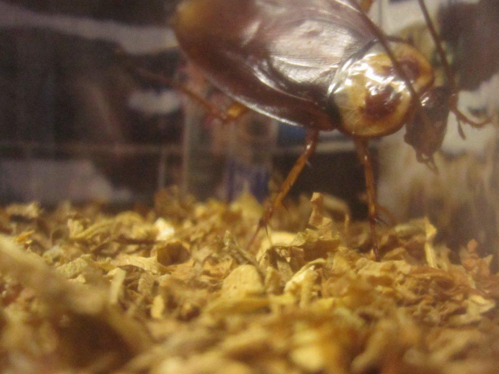 ゴキブリはあまりお気に召さない様子でプイッ!とソッポを向けてしまった!