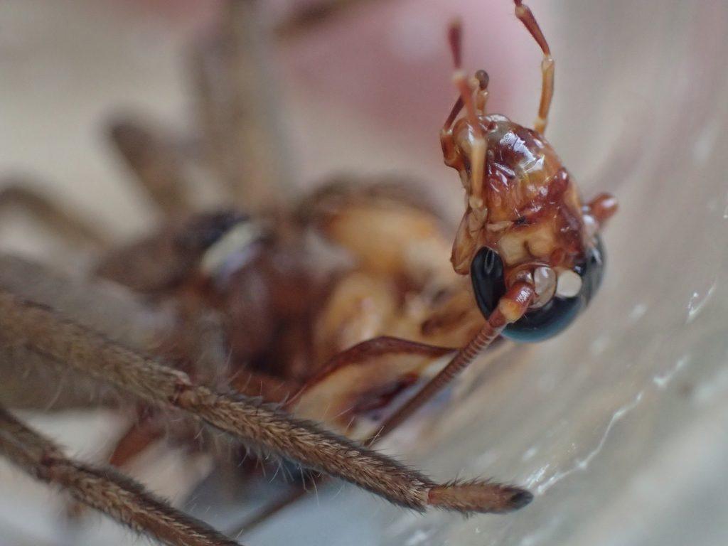ジタバタもがいても逃げられない絶望の状況に命の終わりを悟るゴキブリの表情