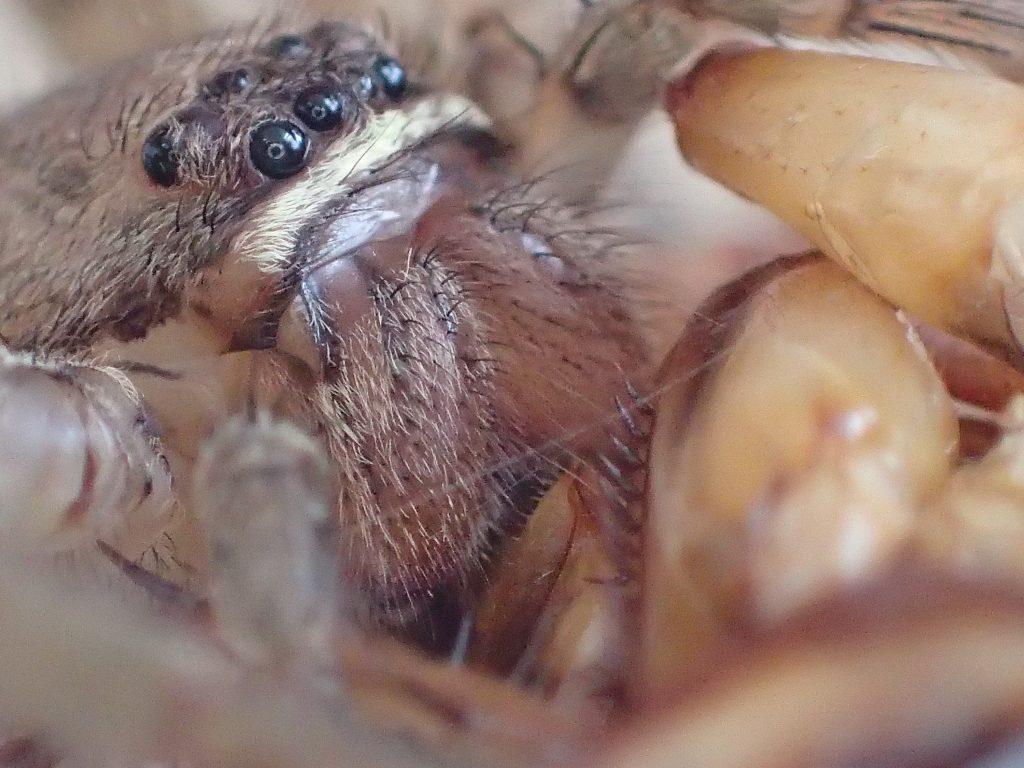 漆黒の目がゴキブリと人間が構えるカメラを睨み続ける