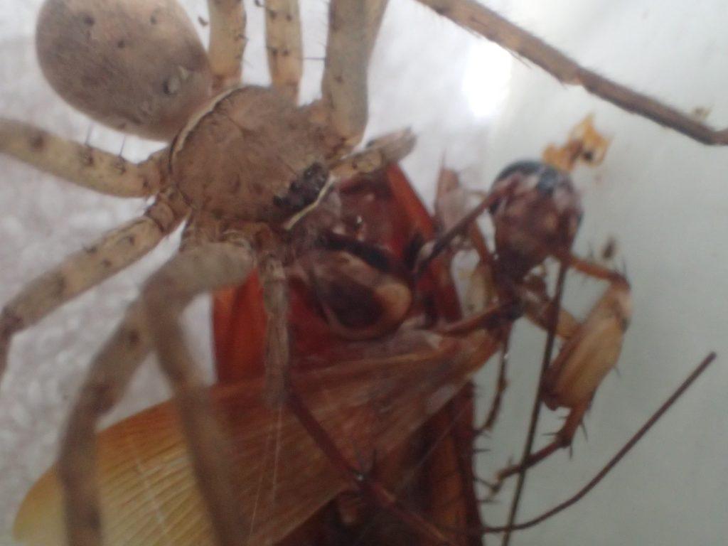自然界の弱肉強食が凝縮されたアシダカグモの狩りシーン