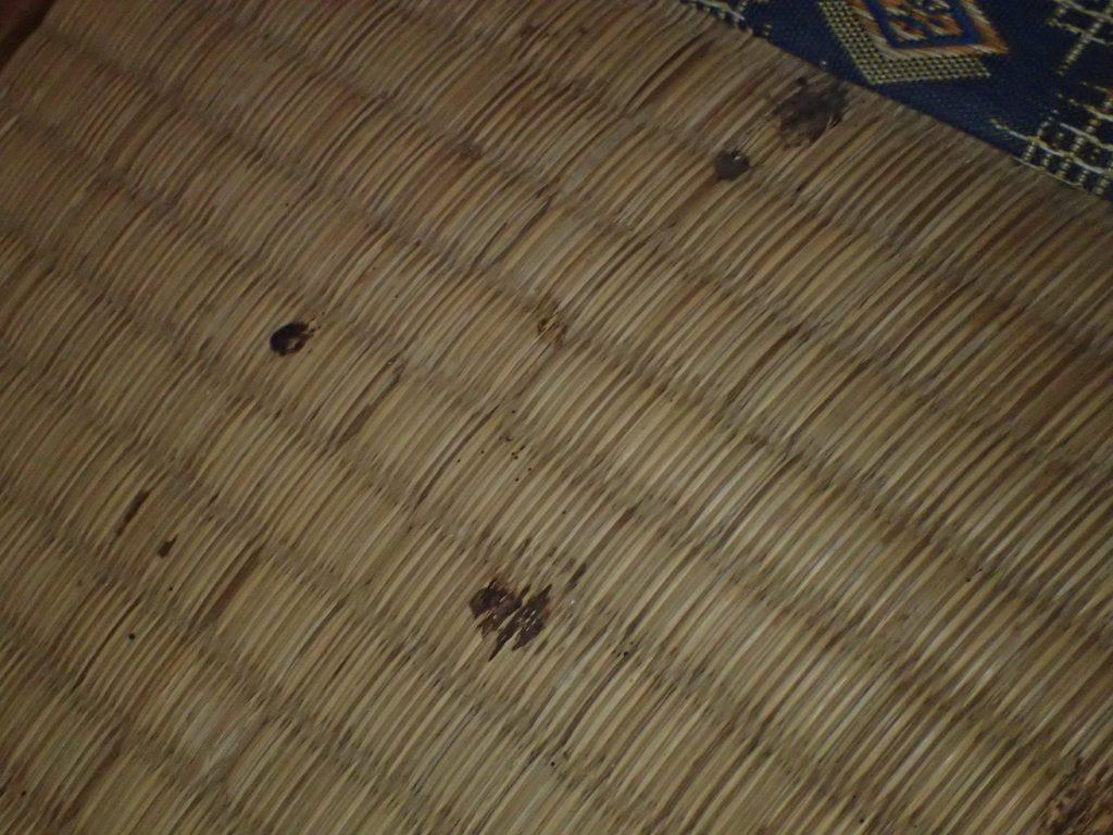 畳(タタミ)の上にヤモリが糞尿を垂れ流し日にちが経過するとシミになり痕が残る。