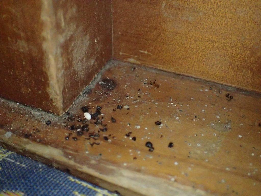 木材の上に残されたヤモリの糞尿ウンチは時間が経つと跡が残り落とせなくなる。