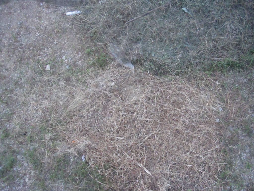 梅雨の雨で雑草が生い茂った場所を草刈りする