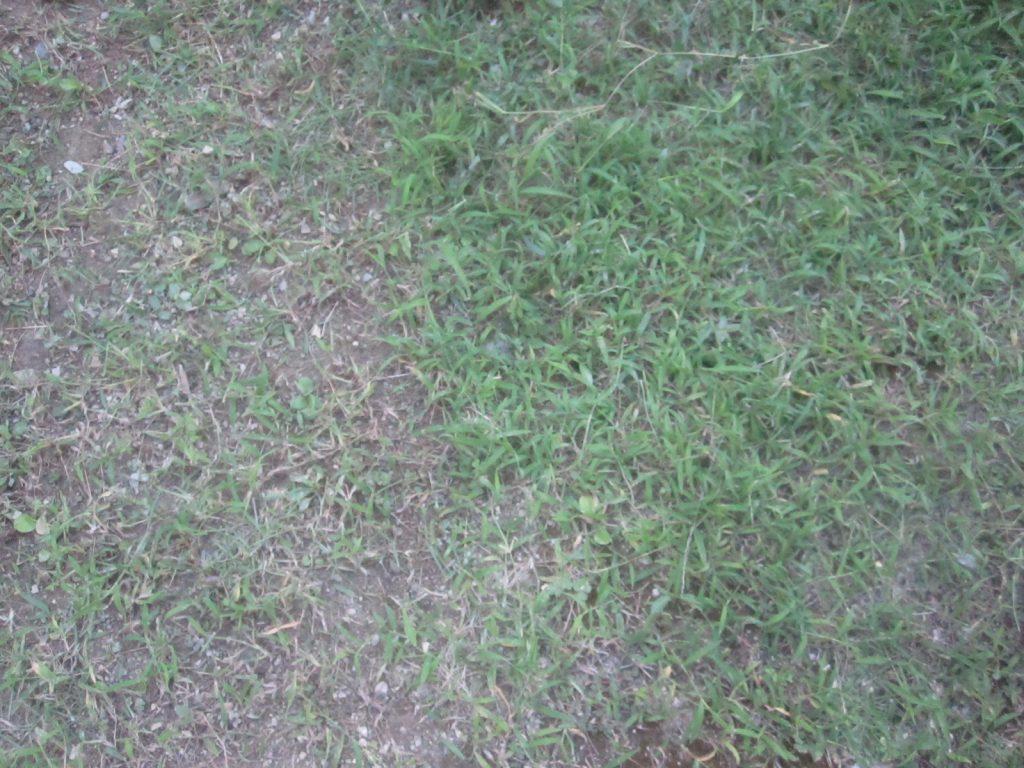 草を刈った場所とまだ刈っていない場所のビフォー・アフター写真