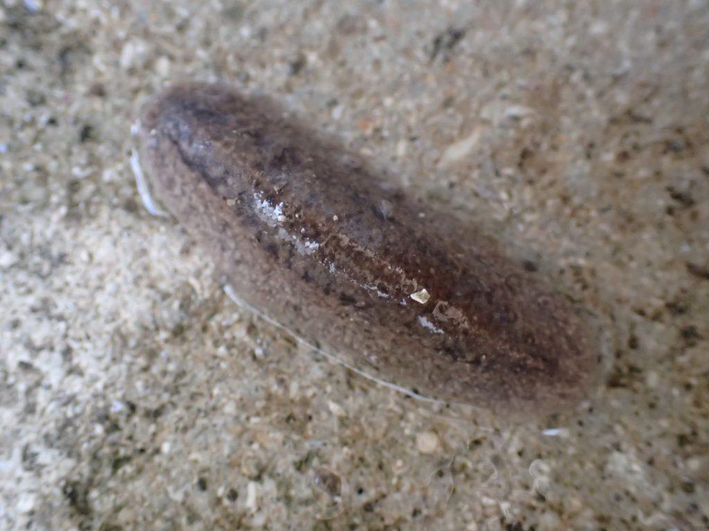 人間の尿(オシッコ)を浴びて小さく縮こまり動かなくなったナメクジの写真・画像