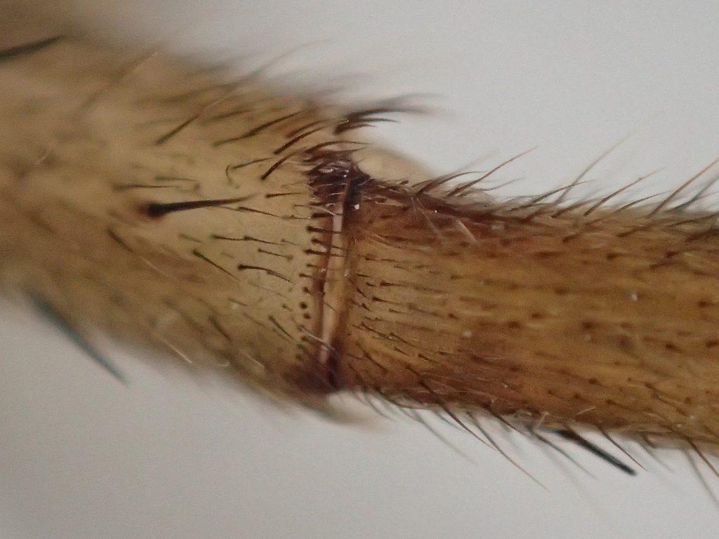 オリンパスTG-4デジカメの顕微鏡モードで超接写撮影した画像