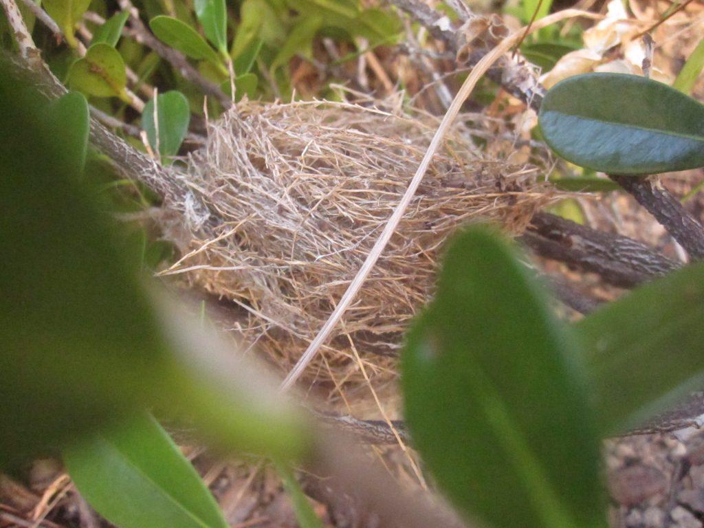 台風通過後に地面に落ちていた鳥の巣