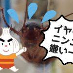ニンニク最強説が浮上?野菜のガーリックは食べる以外にゴキブリ退治など害虫対策への活用も視野に入れよう!