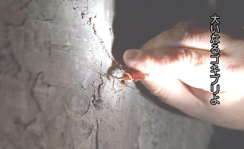 人間の手に捕らえられた害虫ワモンゴキブリが懐中電灯で照らされている