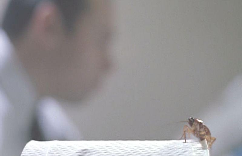 トイレで用を足す男性の横のトイレットペーパーにワモンゴキブリの影が・・・