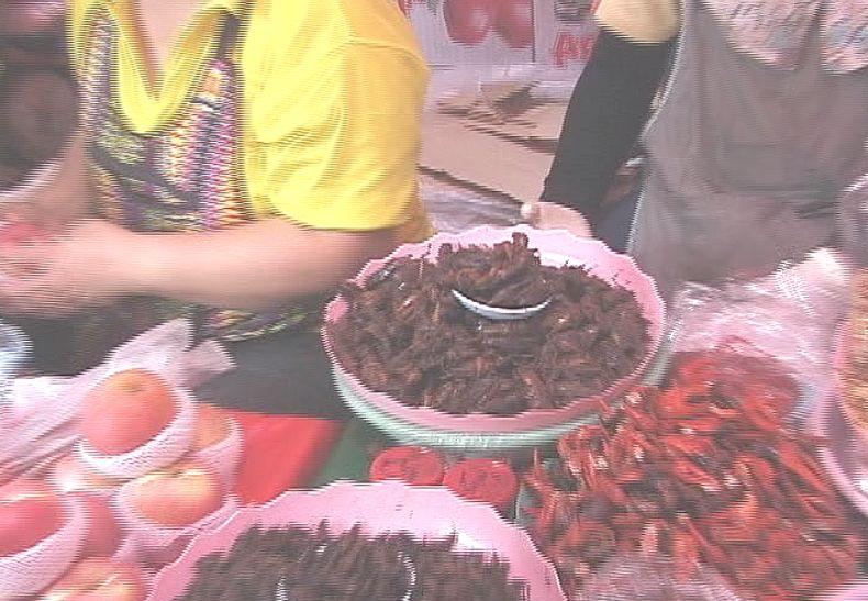 タイの市場・売店で虫を販売している屋台を発見