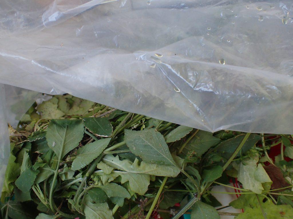 屋外に置いていたゴミ袋にアンモニア臭の黄色い液体が残されていた