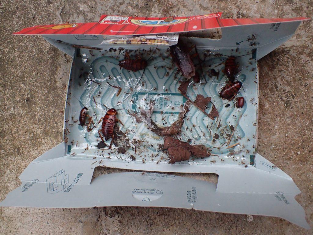 屋外に一晩置いてみると新たにゴキブリを捕らえ、ヤモリはアリに食われていた