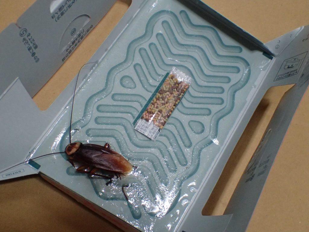 1ヶ月かけて備え付けの誘引剤で捕獲したのがワモンゴキブリ1匹