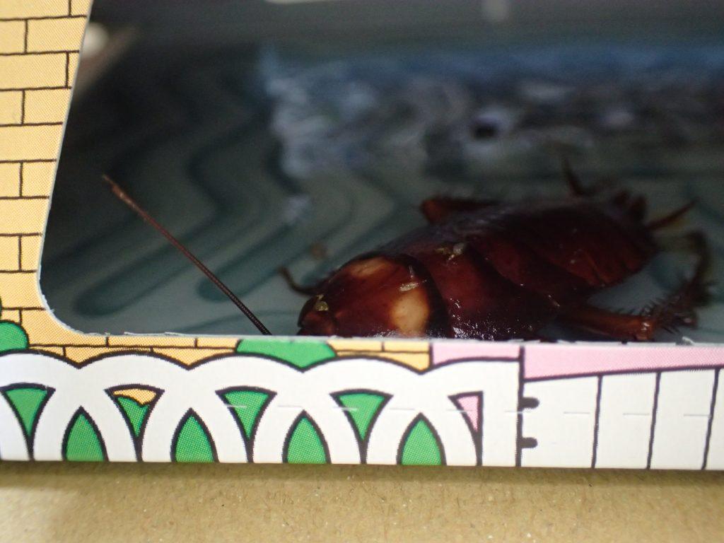 両側の小窓から中を除くと害虫ワモンゴキブリ(幼齢)が粘着シートにかかって身動きが取れなくなっていた