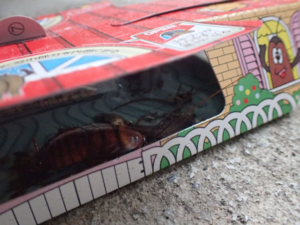 誘引剤ではなくヤモリの死骸に引き寄せられて罠に掛かったゴキブリ
