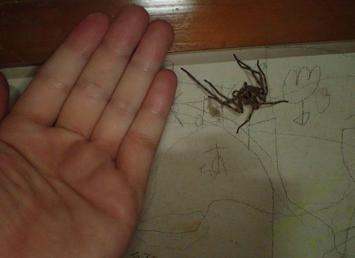 成人男性の手のひらとサイズを比較する図