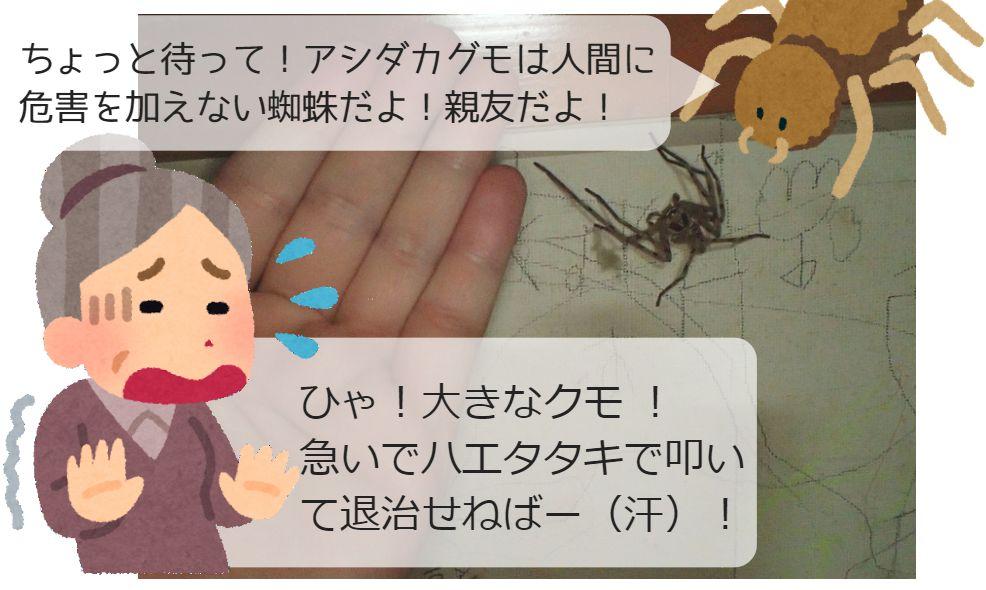 """[訂正]アシダカグモが親友です!通称""""軍曹""""は見た目は怖い蜘蛛だけど、ゴキブリの天敵だから見逃してね(^_-)-☆"""