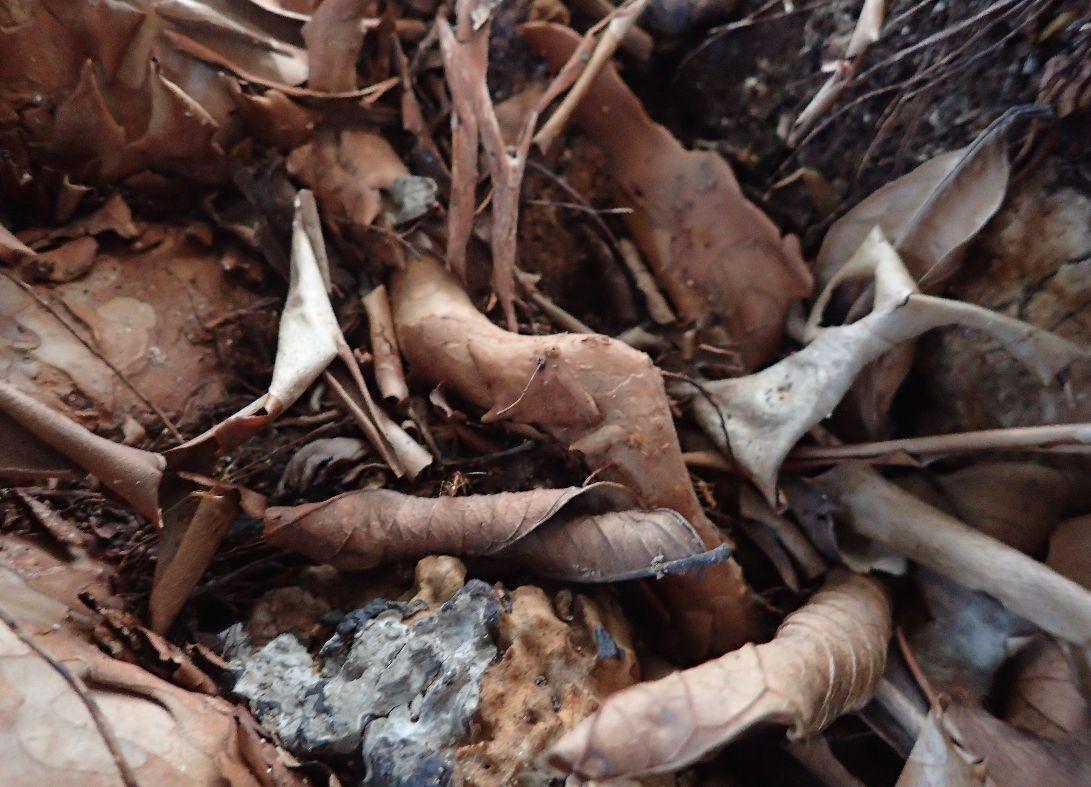 樹木の根元に巣を作ったアシナガキアリ