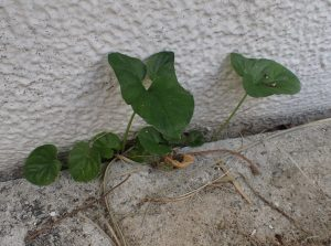 家屋の壁と地面の間に隙間ができて雑草が生えている