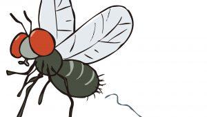 コスパ最強の害虫駆除グッズ『ハエ取り紙』にオレンジ色と誘引剤を加えたら文句なし