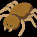 ゴキブリの天敵アシダカグモを捕獲!軍曹の異名を取る最強の捕食者を獲物ワモンゴキブリと対面!