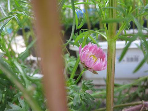 庭に植えた花