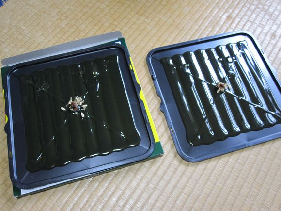 餌の誘引剤を設置した粘着シート