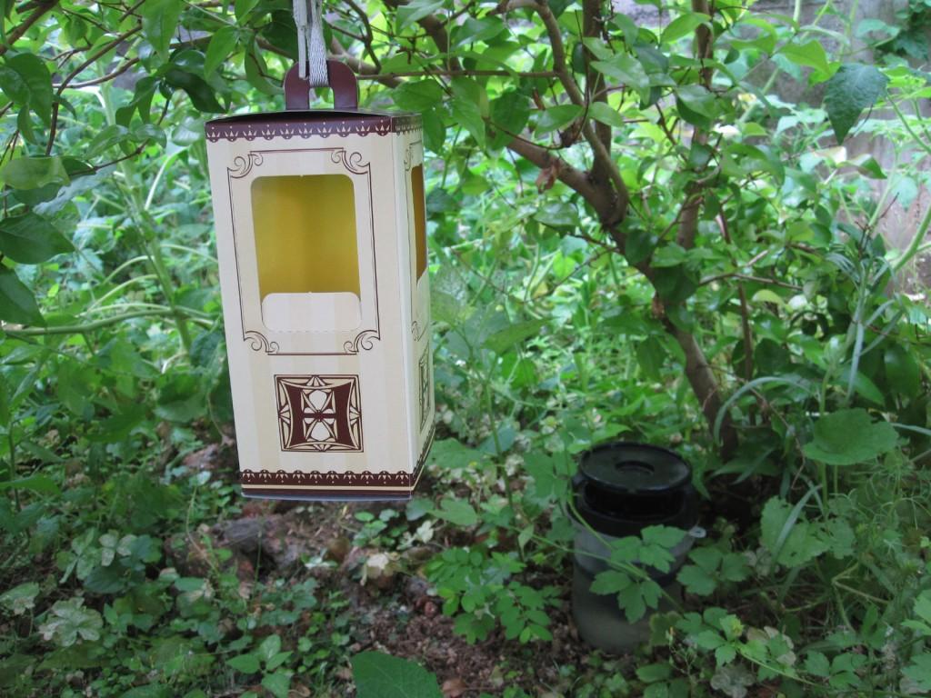 庭に仕掛けたムシとりボックス
