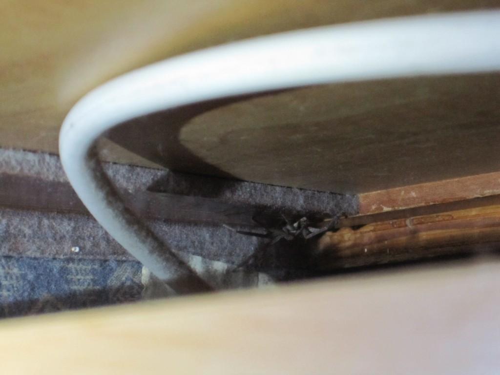 机の裏側に隠れるアシダカグモ