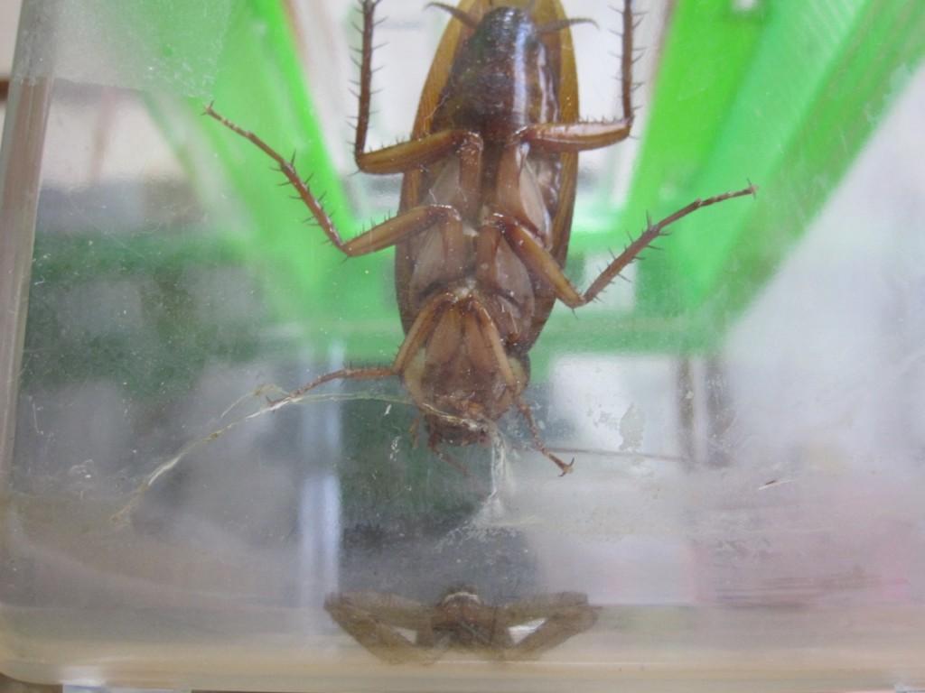 ゴキブリと蜘蛛が接近した瞬間