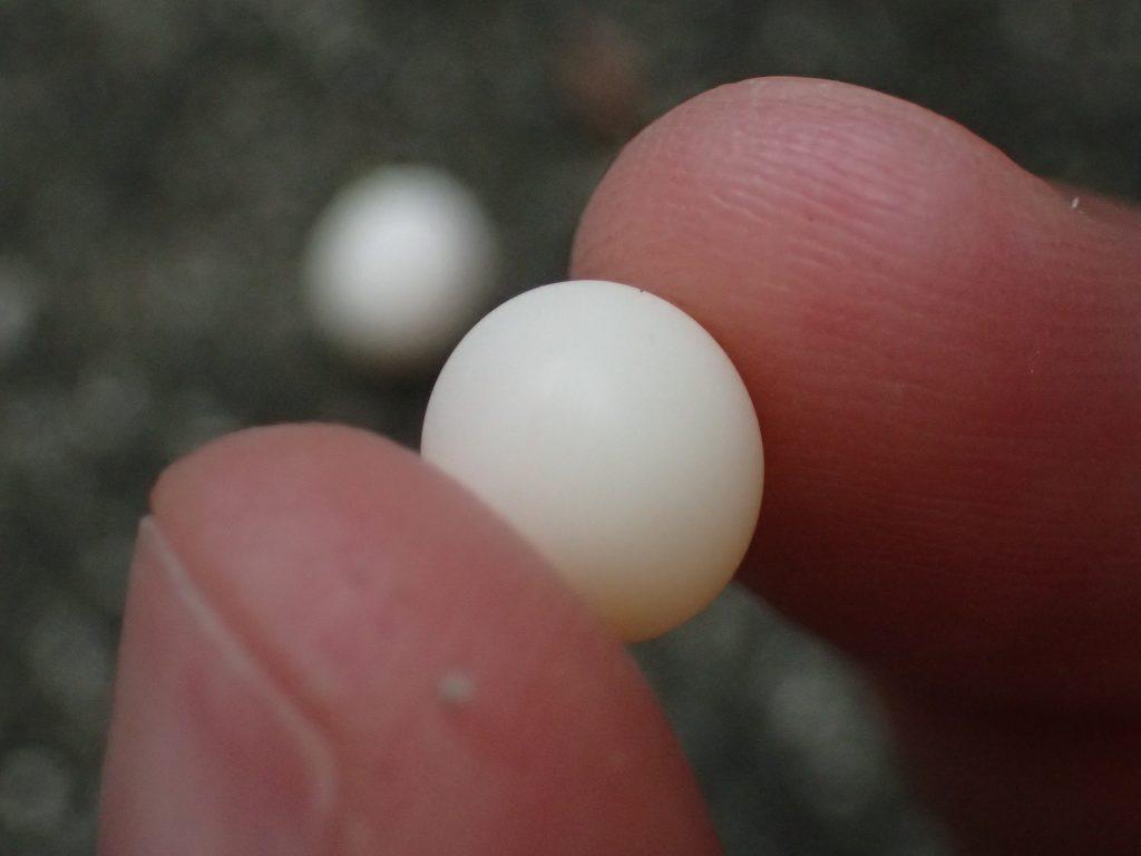 益虫ヤモリ(トカゲ)の白い卵