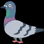 ハトポッポーの悲劇とゴキブリと鳩の意外な接点!?平和の象徴のハトは害虫ゴキブリを食べるの?