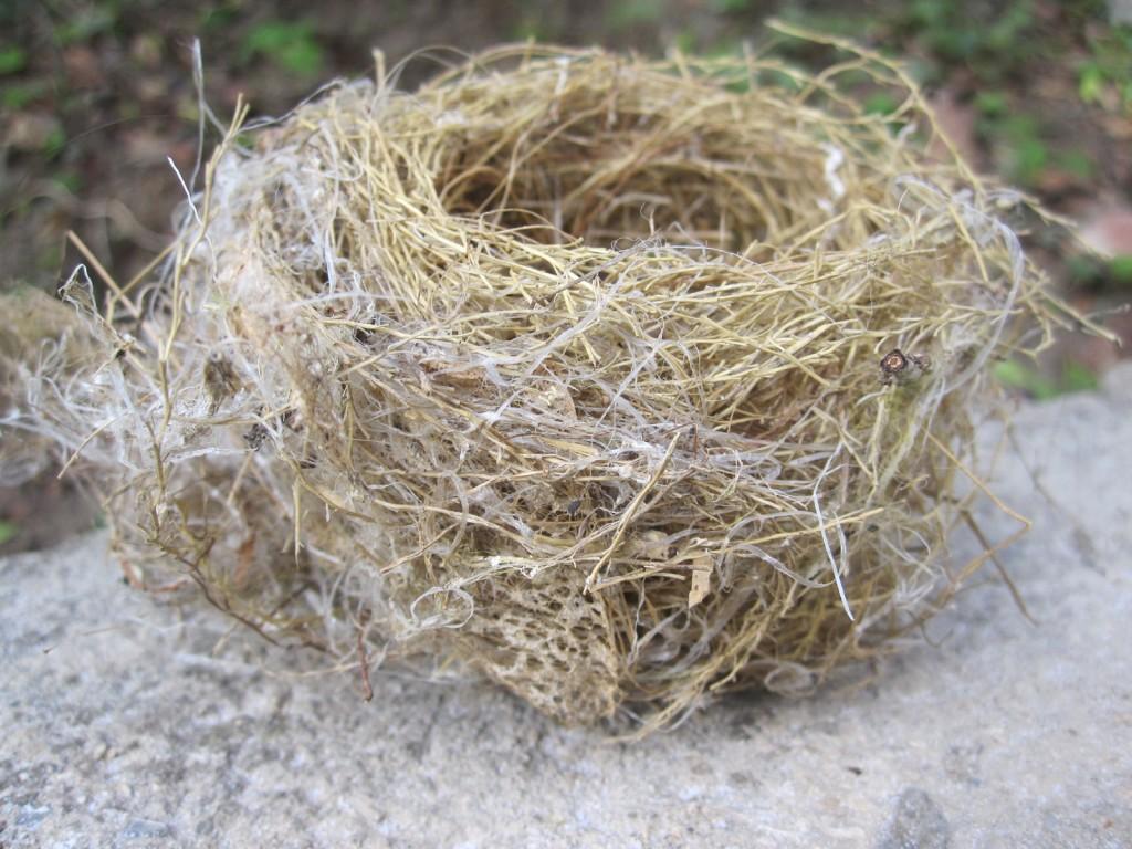 地面に落ちた鳥の巣
