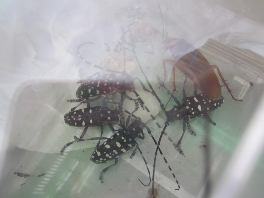 虫カゴの中で食事をする様子