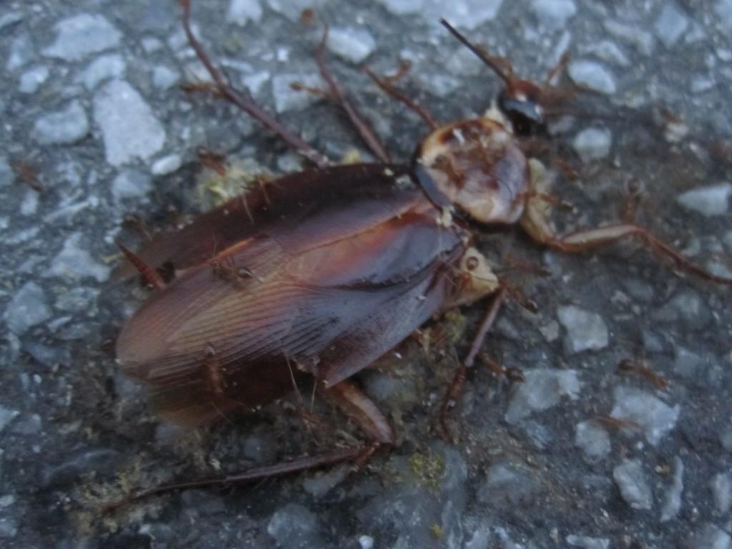 グチャグチャに潰れたゴキブリの死骸