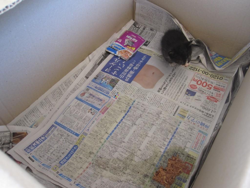新聞紙が敷かれた上に子猫