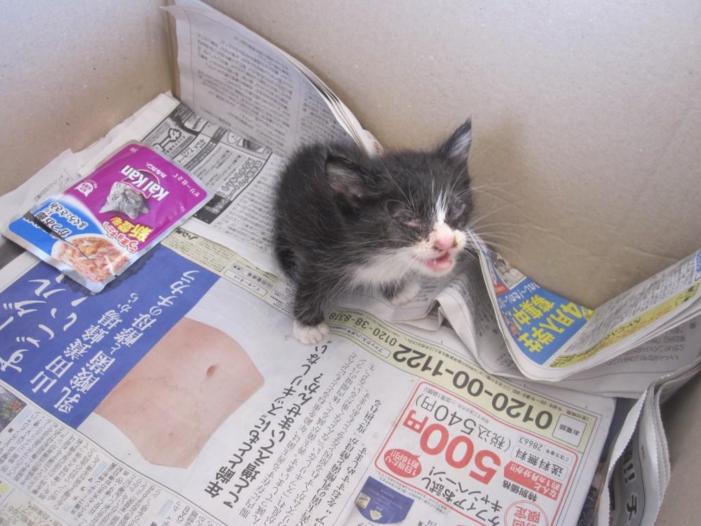 絶えず鳴き声を上げ続ける子猫