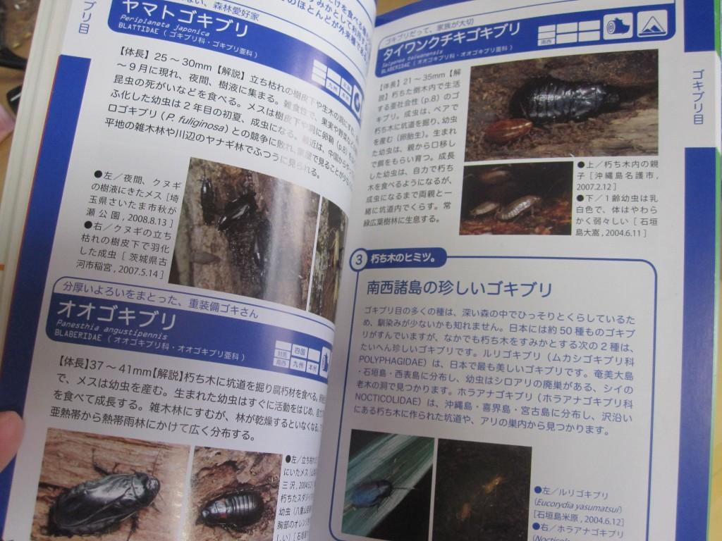 ゴキブリに関するページ