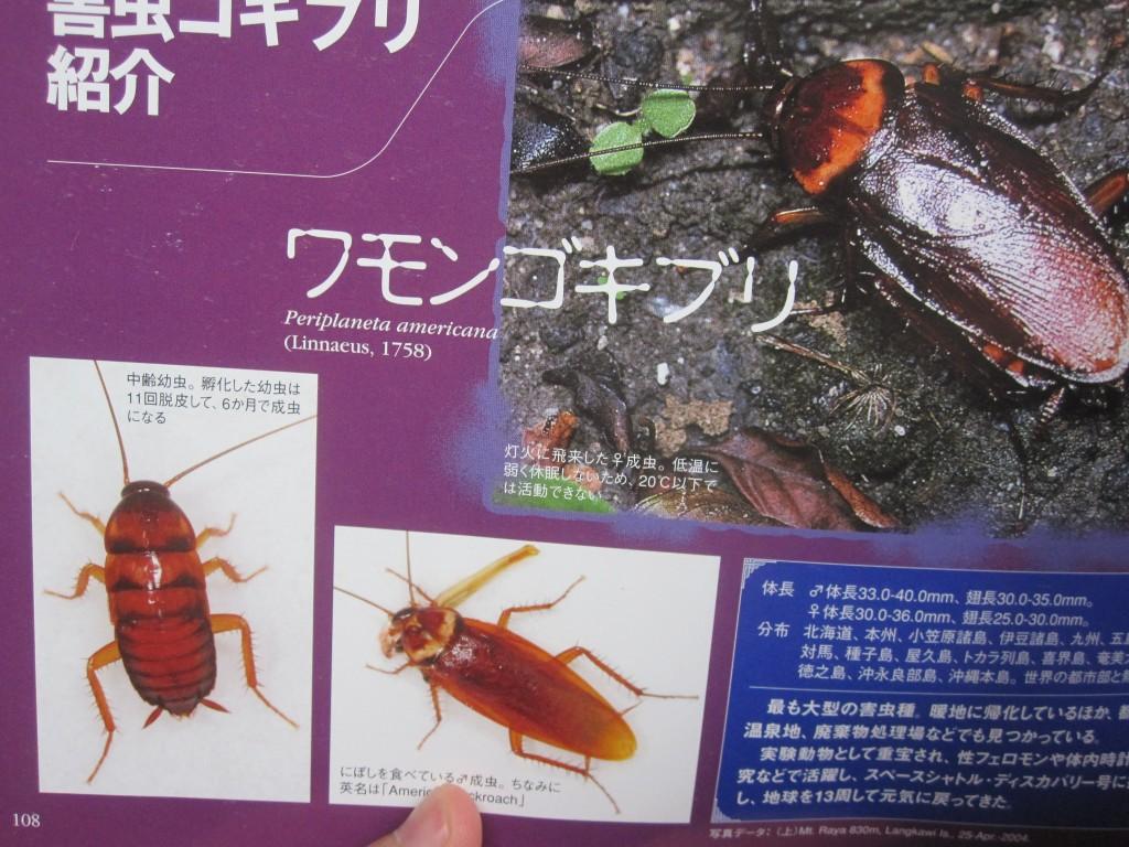 ワモンゴキブリに関するページ