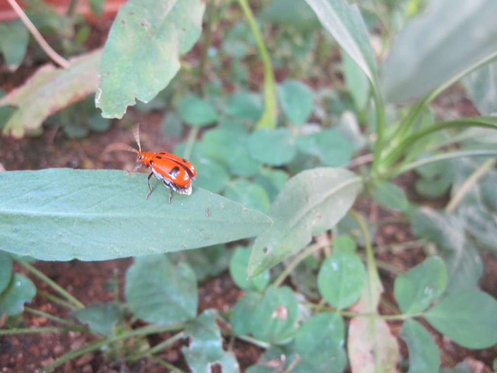 庭で発見した害虫