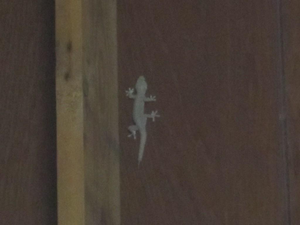 部屋の壁を練り歩くヤモリ