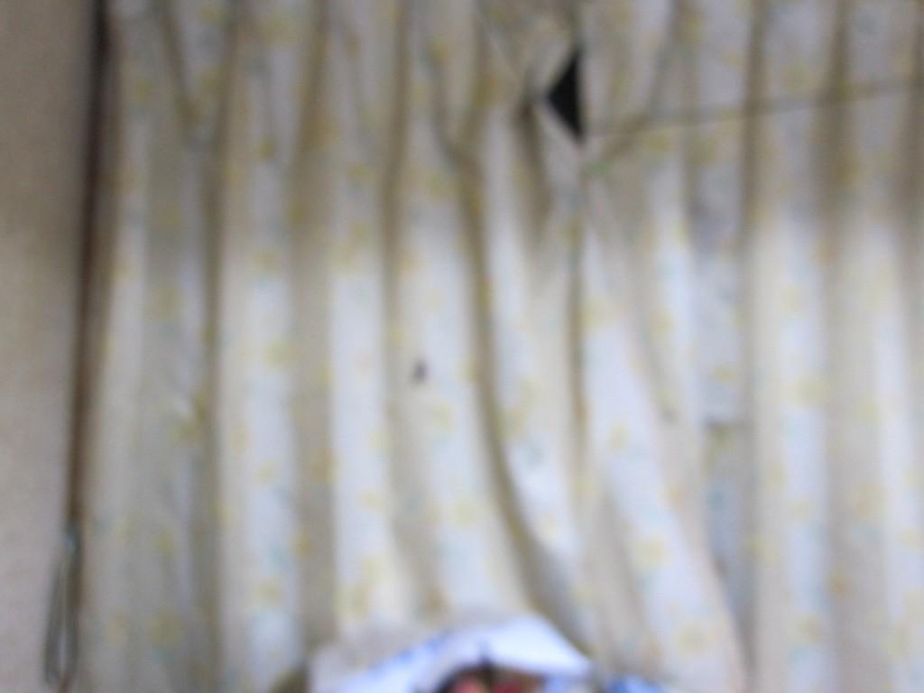 真夜中のカーテンにへばり付く虫