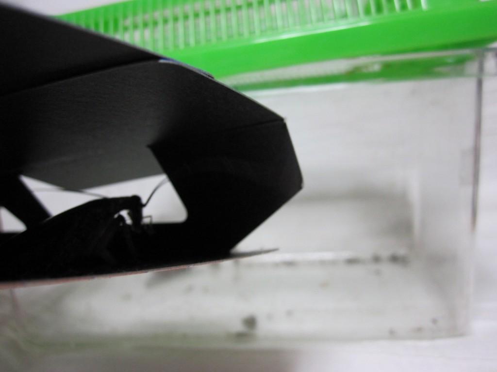 ゴキブリ捕獲器の窓からカマキリを眺めるゴキブリ