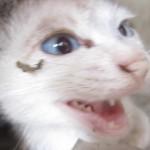 野良猫にエサ与えるネコ好き人間が猫嫌いを増やしている